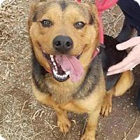 Adopt A Pet :: Lucy - Albuquerque, NM