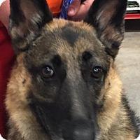 Adopt A Pet :: Navi - Dripping Springs, TX