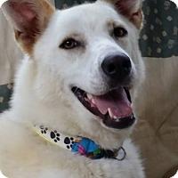 Adopt A Pet :: Crystal - Nashua, NH