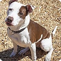 Adopt A Pet :: Sandy - St Helena, CA