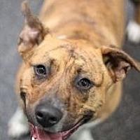 Adopt A Pet :: Lizzie - Riverside, CA