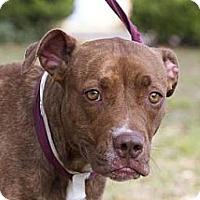 Adopt A Pet :: Zora - Gainesville, FL