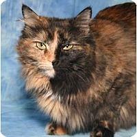 Adopt A Pet :: Rhaney - Cincinnati, OH