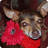 Adopt A Pet :: Maggie and Maisey - New Milford, CT