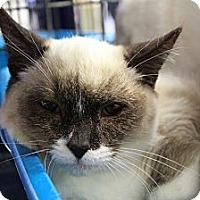 Adopt A Pet :: Anthony - Santa Monica, CA