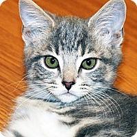 Adopt A Pet :: Queenie - Irvine, CA