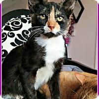 Adopt A Pet :: Sobe - Miami, FL