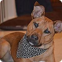 Adopt A Pet :: Maverick - Rochester/Buffalo, NY