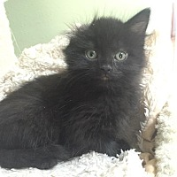 Adopt A Pet :: Reba McEntire - Bentonville, AR