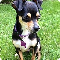 Adopt A Pet :: Angelo - Rockaway, NJ
