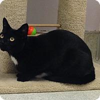 Adopt A Pet :: Mochi - Newport Beach, CA