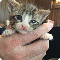 Adopt A Pet :: Leia - Piscataway, NJ