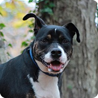 Adopt A Pet :: Diamond - Port Washington, NY
