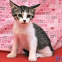 Adopt A Pet :: Fern - Sebastian, FL