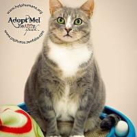 Adopt A Pet :: Cagney - Belton, MO