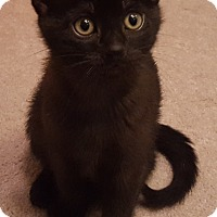 Adopt A Pet :: Skipper - Mount Clemens, MI