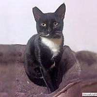 Adopt A Pet :: Zoey - Westchester, CA