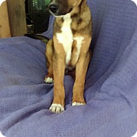Adopt A Pet :: Anthony pending adoption - East Hartford, CT