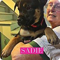 Adopt A Pet :: Sadie - Winchester, VA