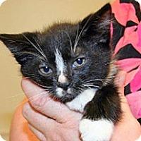 Adopt A Pet :: Nute - Wildomar, CA