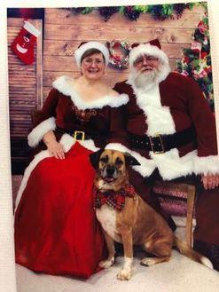 Shepherd (Unknown Type) Mix Dog for adoption in Berea, Ohio - Nova