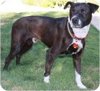 Border Collie Mix Dog for adoption in Gilbert, Arizona - Buddy