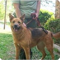 Adopt A Pet :: Mindy - Glastonbury, CT