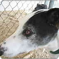 Adopt A Pet :: Cy - St Petersburg, FL