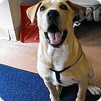 Adopt A Pet :: Titan - Silver Lake, WI