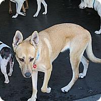 Adopt A Pet :: Ava..I am sweet and mellow - Redondo Beach, CA