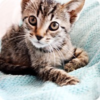 Adopt A Pet :: Jeeves - Xenia, OH