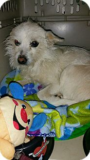 Terrier (Unknown Type, Small) Mix Dog for adoption in Astoria, New York - Sally
