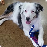 Adopt A Pet :: Jessie - DEAF pending adoption - Post Falls, ID