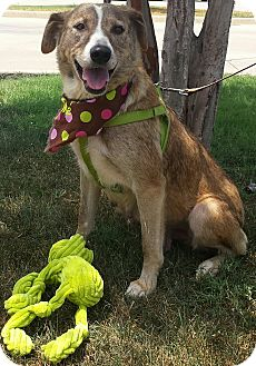 Shepherd (Unknown Type)/Border Terrier Mix Dog for adoption in Terrell, Texas - Mae West