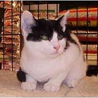 Adopt A Pet :: Zorro - Dale City, VA