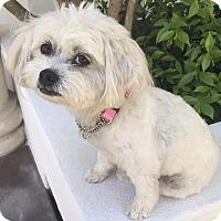 Adopt A Pet :: HAPPY - Los Angeles, CA