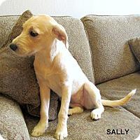 Adopt A Pet :: Sally-meet me 6/23 - Manchester, CT