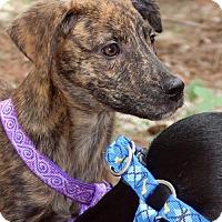 Adopt A Pet :: Fritzy - Albany, NY