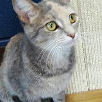 Adopt A Pet :: Masha - Wilmington, OH