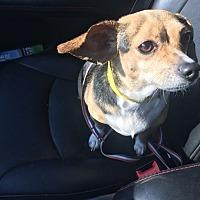 Adopt A Pet :: Aria - Huntington Beach, CA