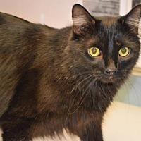 Adopt A Pet :: Boo Boo - Franklin, IN