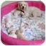 Photo 4 - Bichon Frise Mix Puppy for adoption in La Costa, California - Cameron