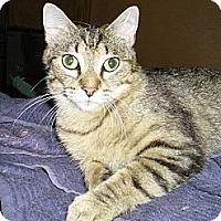 Adopt A Pet :: Abby - Bentonville, AR