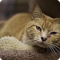 Adopt A Pet :: Snootzie - St. Petersburg, FL