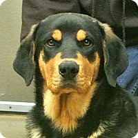 Adopt A Pet :: Sampson - white settlment, TX