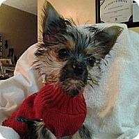 Adopt A Pet :: Joshua - Blairstown, NJ