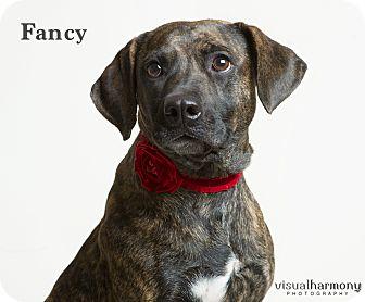 Plott Hound Mix Dog for adoption in Phoenix, Arizona - Fancy