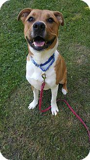 Shepherd (Unknown Type)/Hound (Unknown Type) Mix Dog for adoption in South Park, Pennsylvania - Leo