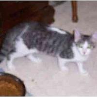 Adopt A Pet :: Darby & Ryan - Simms, TX