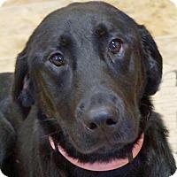 Adopt A Pet :: Mindy - Sprakers, NY